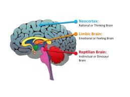 brainnn