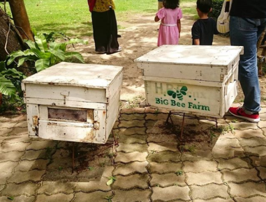 Big Bee Farm Phuket2