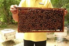 Big Bee Farm Phuket3