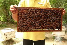 Big Bee Farm Phuket3