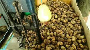 Peanut Store2