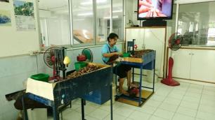 Peanut Store3